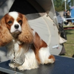 ch-pascavale-handsome-marley-01